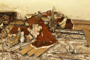 L'impact à long terme de la mérule dans votre maison